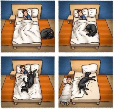 Kutyával alvás ágyban